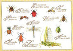 "GOK3029 Thea Gouverneur Kit Insects 16"" x 11"" ; Linen; 30"