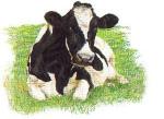 """GOK451A Thea Gouverneur Kit Holstein Cow Looking Forward 24"""" x 18"""" Aida 16c"""