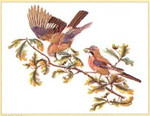 "GOK2022 Thea Gouverneur Kit Birds On Branch 22"" x 20""; Linen; 36ct"