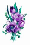 Silver Lining Lavender Tulips 210 x 346