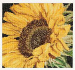 "GOK488A Thea Gouverneur Kit Sunflower 6"" x 6""  Aida 18ct"