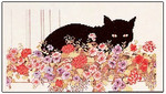 Black Cats Flyer Permin Graphs
