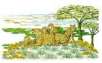 Cheetahs Permin Graphs
