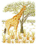 Giraffe Permin Graphs