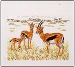 Gazelles Permin Graphs