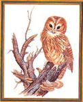 "7792677 Eva Rosenstand Kit Owl 16"" x 20""; Aida; 14ct"