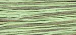 1181 Cape Cod Retired Cotton 6- Strand Floss Weeks Dye Work