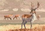 "HCK1212 Heritage Crafts Kit Deer Park  Scenes by John Clayton 12.5"" x 8.75""; Evenweave; 27ct"