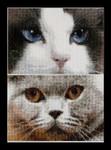 "GOK542A Thea Gouverneur Kit Cats - Smokey & Blu 6.8"" x 4.8"" EACH; Aida; 16ct"