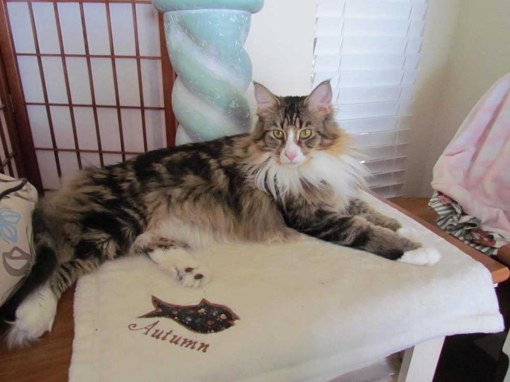 Autumn with her fish blanket