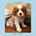 New puppy - boy
