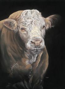 Simmental Bull artwork by Kay Johns