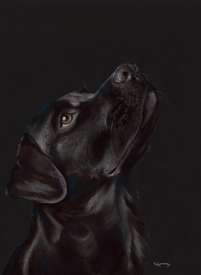 Black Labrador artwork by Kay Johns