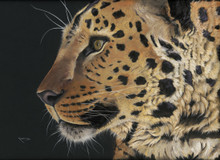 Amur leopard artwork by Kay Johns