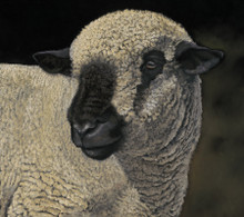 Hampshire Ram artwork by Kay Johns