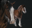 Shire mare and foal artwork by Kay Johns