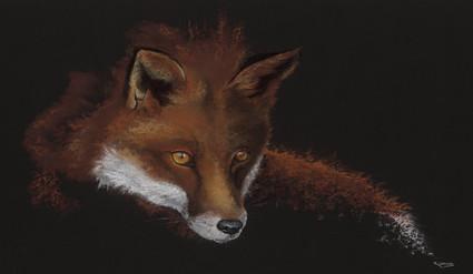 Fox artwork by Kay Johns