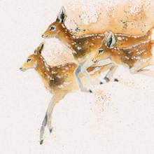 Roe Deer Artwork by Kay Johns