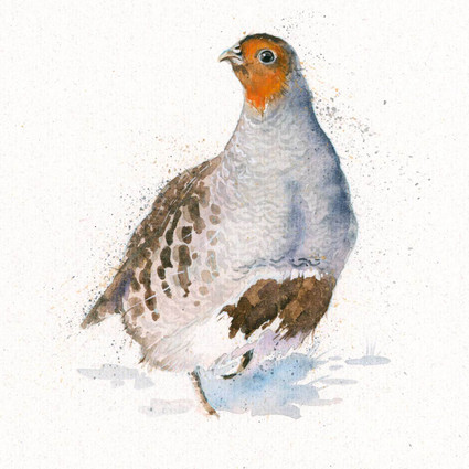 Grey Partridge, artwork by Kay Johns