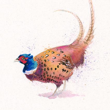 Pheasant artwork by Kay Johns
