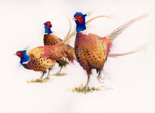 Pheasant artwork by Kay Johns