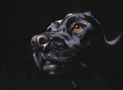 Black Lab Artwork by Kay Johns