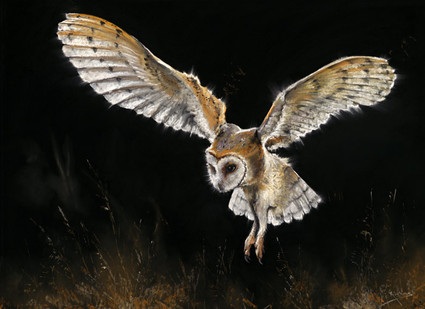 Barn Owl Artwork by Kay Johns