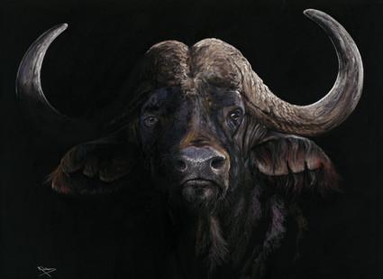 Cape Buffalo Artwork by Kay Johns
