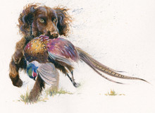 Working Cocker Spaniel artwork by Kay Johns