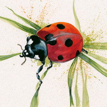 Ladybird limited edition painting by Kay Johns