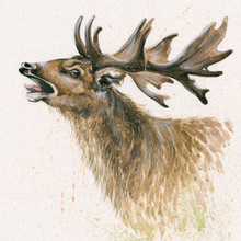 Stag limited edition painting by Kay Johns