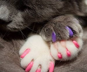 Nail Caps for Cats & Kittens