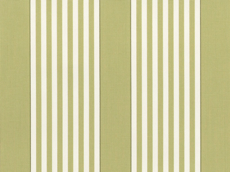 Perennials I Love Stripes Sprout
