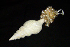 Hawaiian Shell Ornament