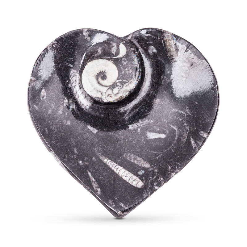 Ammonite Fossil Heart Dish