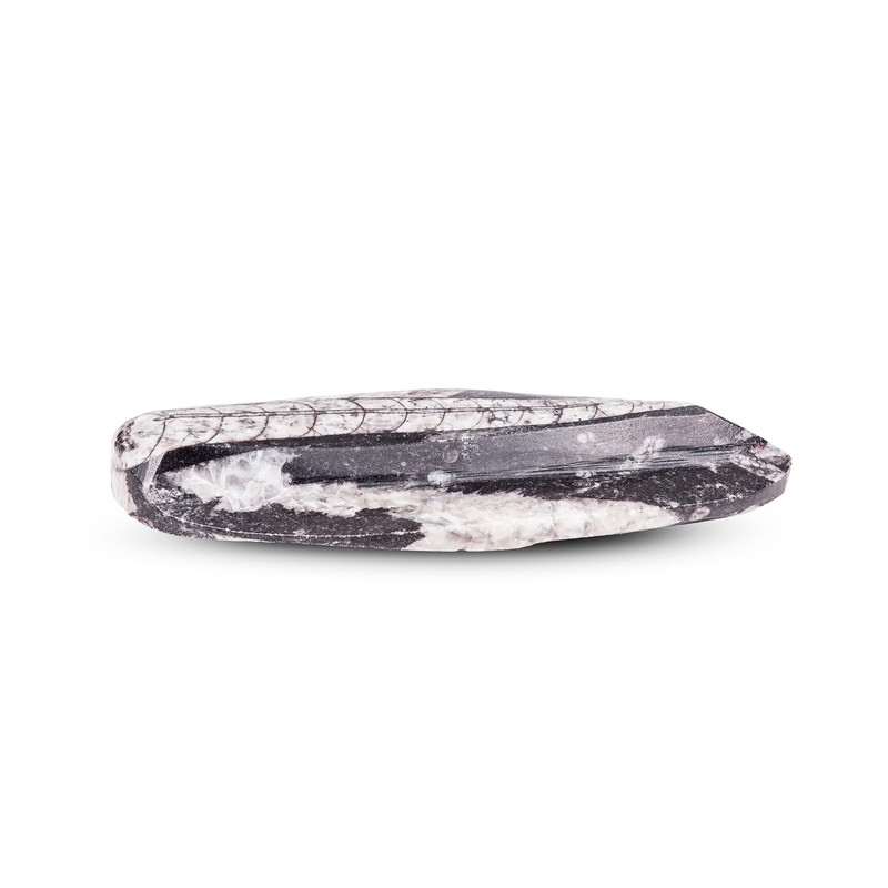 Belemnite Fossil Paper Weight