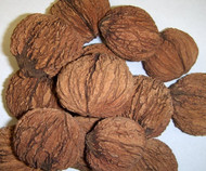 Black Walnut Seed