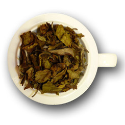 Safari White Tea