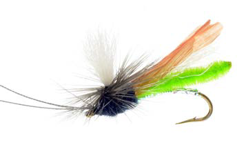 Headlight Caddis, Green