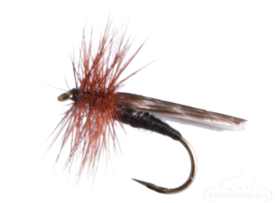 Mottled Caddis, Black