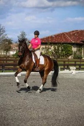 Abuse in the Dressage World – Breaking the Silence