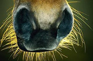 WHISKERS – DOES YOUR HORSE REALLY NEED THEM?