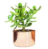 "4"" Copper Planter"
