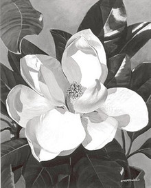White Magnolia--M.Hornbuckle
