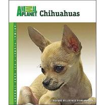 Chihuahuas Book