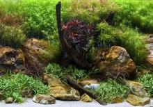 SeaView Aqua Garden/Bright Stone Background 24inx50ft