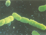 Gut Health, Beneficial Bacteria and You