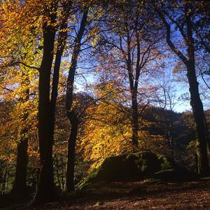 Westmorland Blend