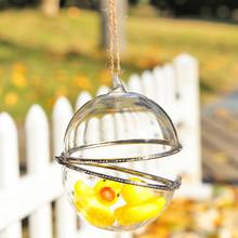 10cm Opening Hanging Ball Succulent, terrarium, wedding centrepiece, product showcase