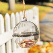 10cm Opening Hanging Ball Succulent, terrarium, wedding centrepiece, product showcase